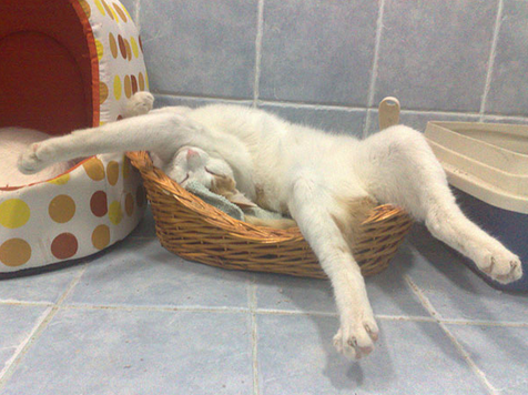 here are 20 cats who have completely mastered the art of