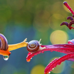LOOK: Ukrainian photographer captures the magical miniature world of snails