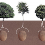 Forget about coffins: Now you can turn into a tree when you die