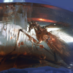 Miner stumbles across perfectly-preserved cockroach that walked with dinosaurs