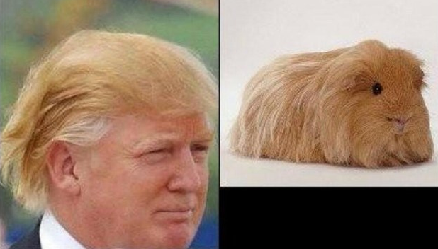 Here are 14 things that look like Donald Trump – DeadState