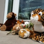People are turning Walter Palmer's dental office into a makeshift animal memorial
