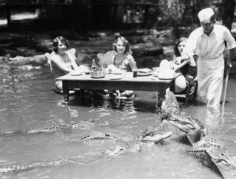 There Was Once A F Cking Alligator Petting Zoo In Los
