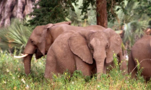 deadstate elephants without tusks